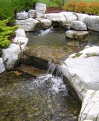 Garden in Guelph Ontario