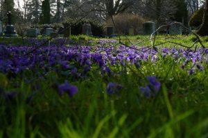 Flowers blooming at Woodlawn Memorial Park