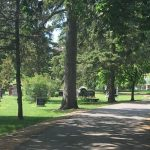 Take A Walk Through Woodlawn Memorial Park- image of path through cemetary