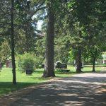 Take A Walk Through Woodlawn Memorial Park- image of path through cemetary