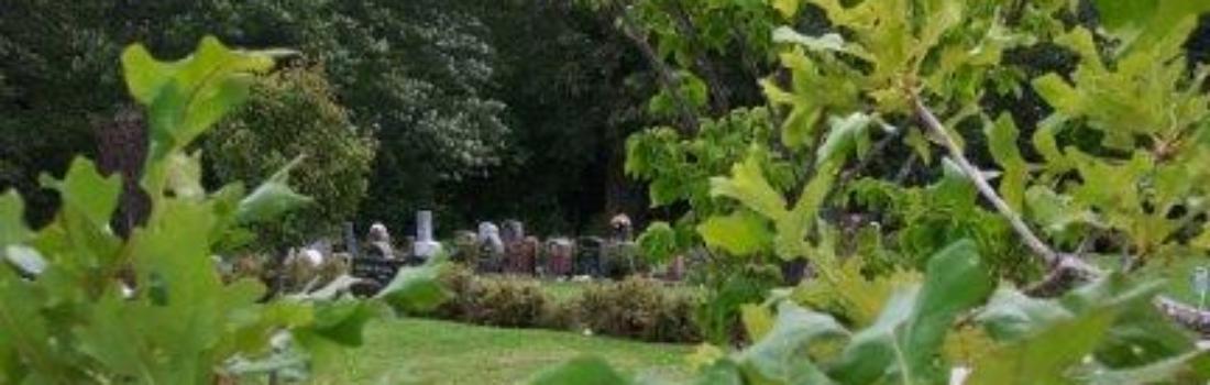 The Majestic Oak in the Lilac Block