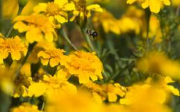 Honeybees, Sweet Memories, and Woodlawn Memorial Park